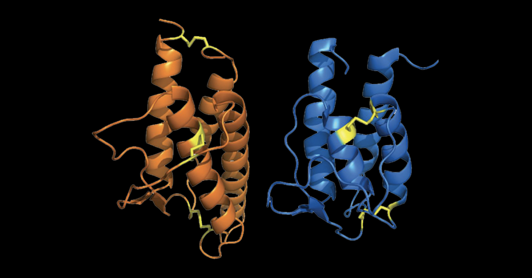 Models of Interleukin 4 and 13
